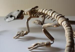 Giovanni Longo / Twin lizards, 2013